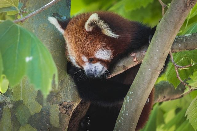 Как вручную проверить обновления Firefox